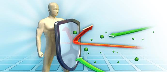 ciberžolė imunitetas