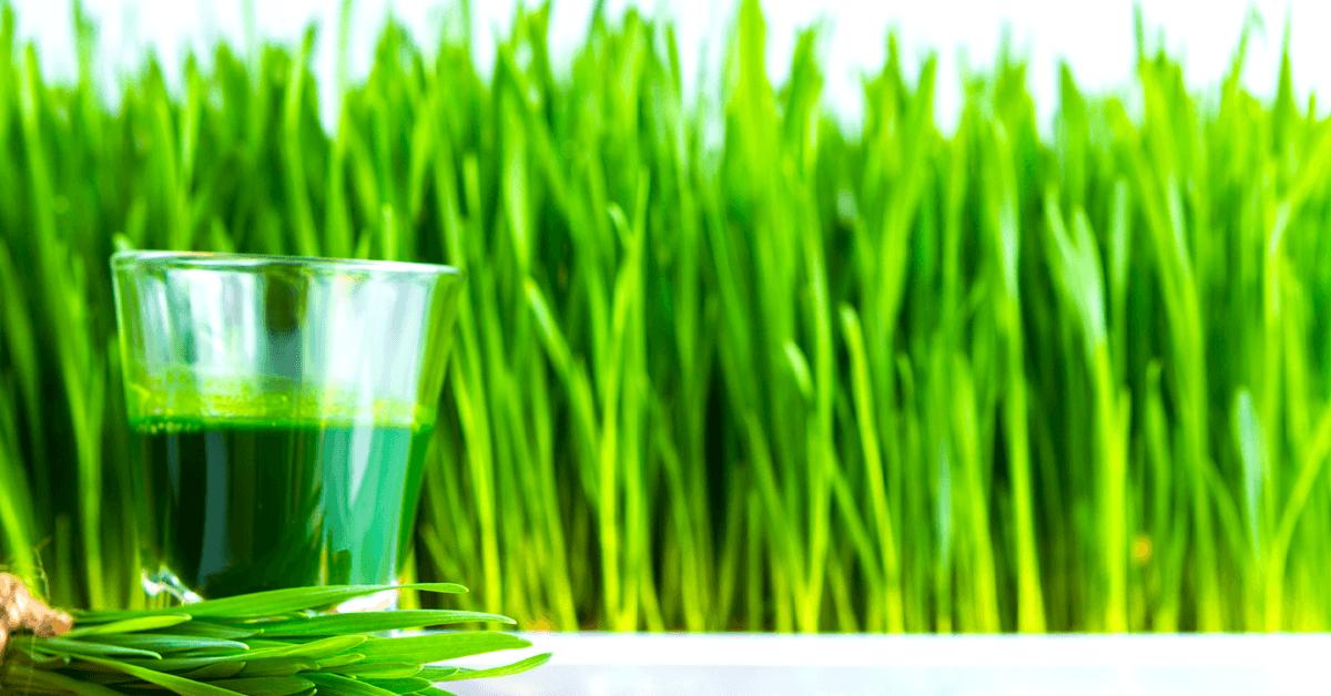 kviečių žolių nauda sveikatai širdžiai